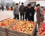 Târg de mere, 100% made in Fălticeni.