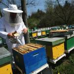 stupi_apicultura