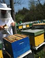 Impunerea veniturilor din apicultură pe baza normelor de venit