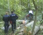 Patru indivizi au culcat la pământ 96 de arbori
