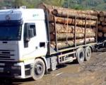 Dosar penal pentru furt de material lemnos