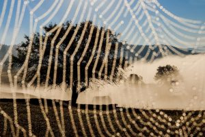 Fotografie realizată de Marina Sveduneac, publicată în National Geographic