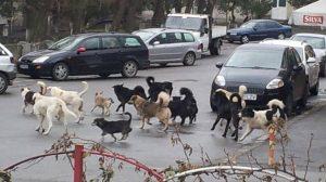 Odată cu încălzirea vremii, au apărut zeci de câini fără stăpân