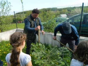1. Plantare de brăduți în curtea Școlii Primare Codru