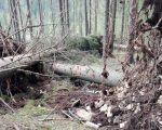 Arbori doborâţi intenționat într-o pădure privată, în zona Falcău