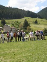 Cei mai frumoși câini din rasa Ciobănesc Românesc de Bucovina, premiați la Câmpulung Moldovenesc