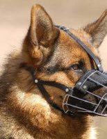 17 proprietari de câini periculoși, verificați de polițiștii suceveni