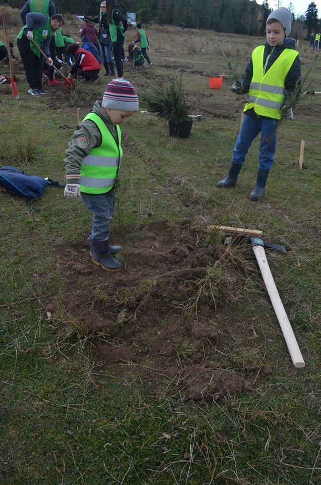 """S-a dat startul proiectului """"Pădurea de Mâine"""" plantându-se 21 de mii de arbori"""