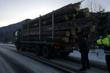 garda forestiera a confiscat lemnul si a amenda o firma din moldovita