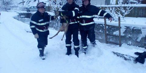 pui de caprioara salvat de pompieri